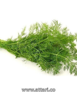 گیاه شوید